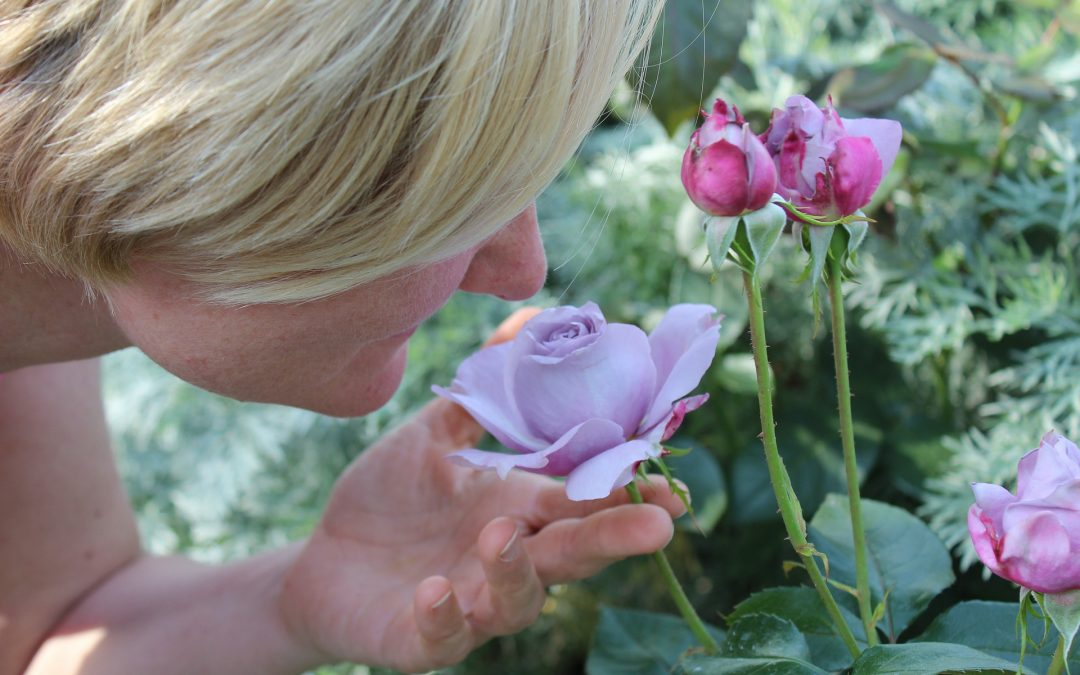Woman smelling a purple rose