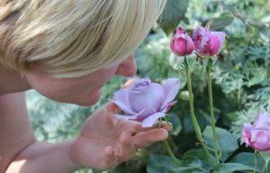 Woman smelling a purple rose