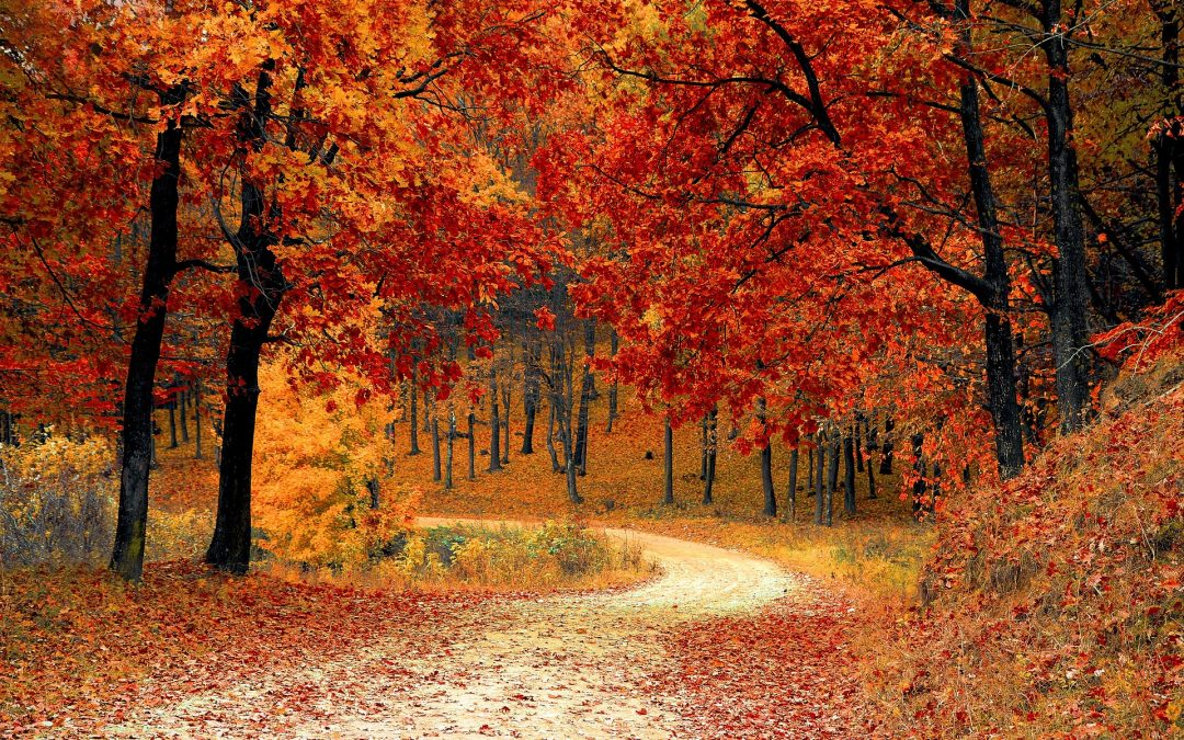 A winding lane through red and orange autumnal trees