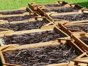 Vanilla pods in crates drying in the sun